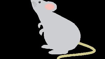 ネズミ駆除についてご説明させていただきます。のアイキャッチ画像