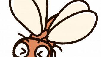 シロアリの羽アリの飛ぶ時期も間近。今のうちに床下点検や予防工事をお勧めいたします。のアイキャッチ画像