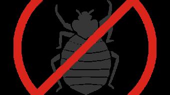 【トコジラミ】という虫に注意してくださいのアイキャッチ画像